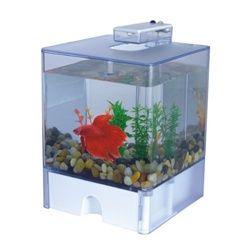 Aqua Box - College Dorm Room Betta Fish Tank College Pet Accessories