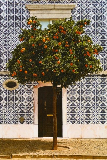 mediterraneanPortugal House Tile, Gardens Ideas, Inspiration, Blue, Front Doors, Fruit Trees, Orange Trees, Castro Marim, Portuguese House