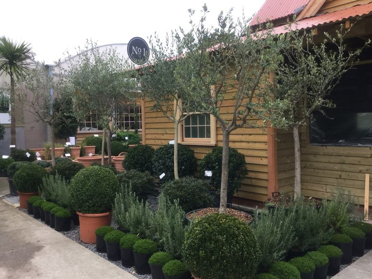Huge selection of hardy, evergreen plants at AP