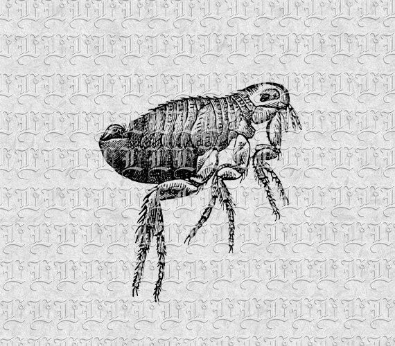 Small Insect Flea Vintage Clip Art by luminariumgraphics on Etsy, $2.20