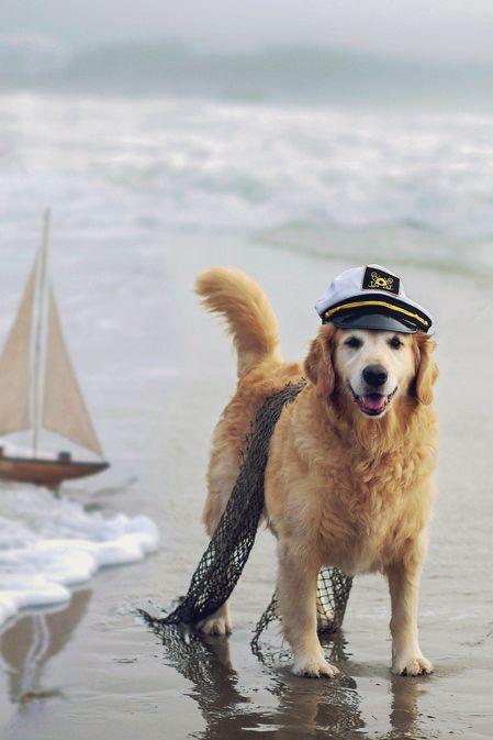 Ahoy, captain