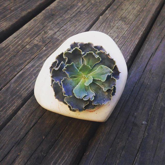 El yapımı seramik saksı içinde Echeveria ruffles 🌞 #terraquadesign #echeveria #sukulent #naturelovers #succulent #succulove #lovegreen #handmade #ceramic #pot #pottery #elyapımı #saksı #bitki #instadaily #garden #tagsforlikes #cactus #cacti #plantshop #beauty #unique #istanbul
