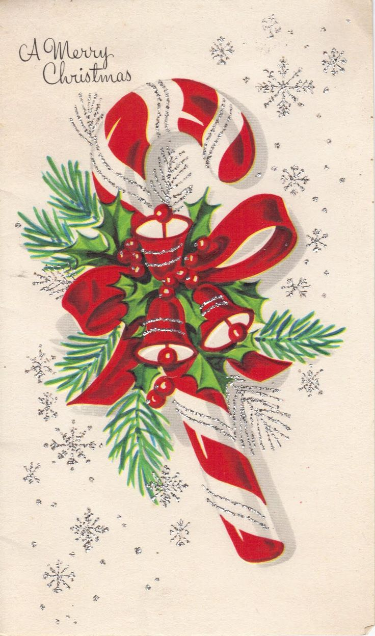 Christmas Card Picture 24 Best Funny Christmas Cards Images On Pinterest