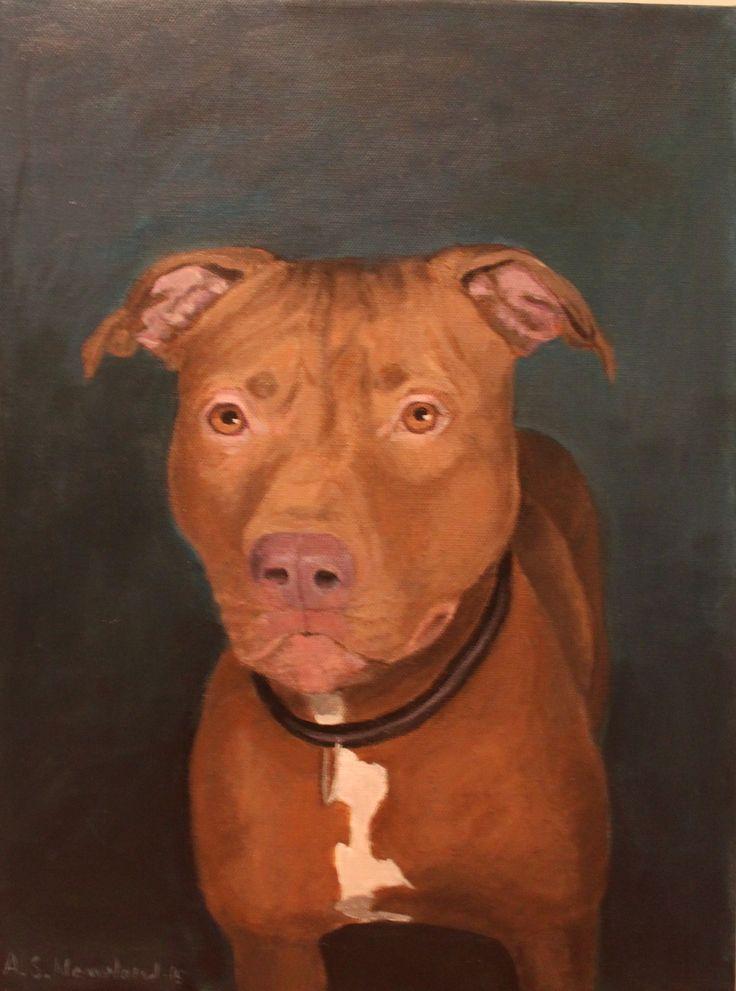 A portrait of a Pitbull.