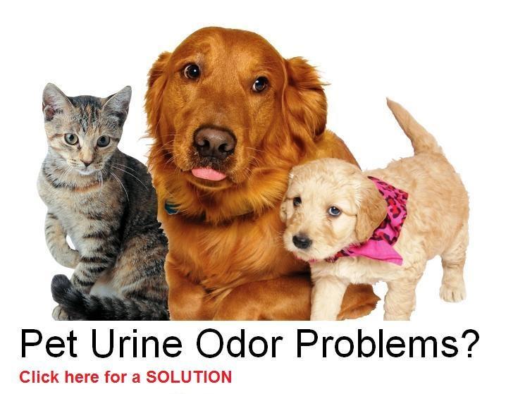 Free odor removal techniques from Ken the Odor DudeCarpets Pets, Odordud Httpwwwodordudecom, Removal Pets, Pets Odor, Odor Removal, Pets Stained, Green Pets, Odordud Http Www Odordude Com, Odor Dude