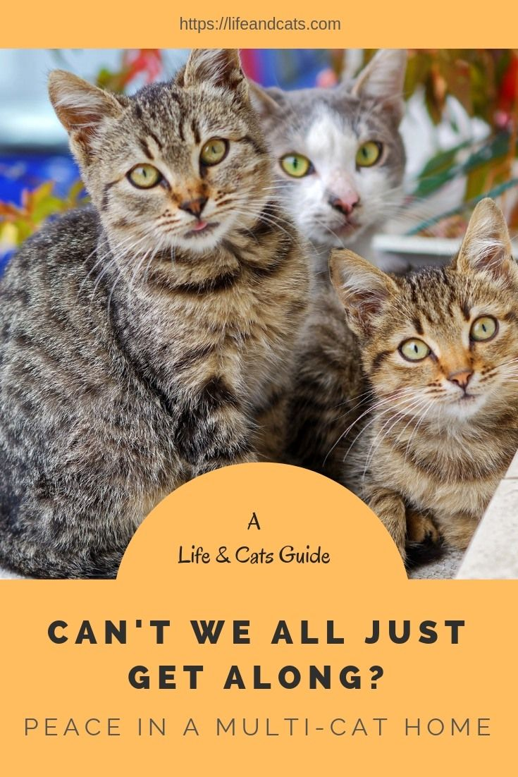 Tips For Creating Harmony In Your Multi Cat Household Life Cats Pet Care Cats Cat Allergies Kitten Care