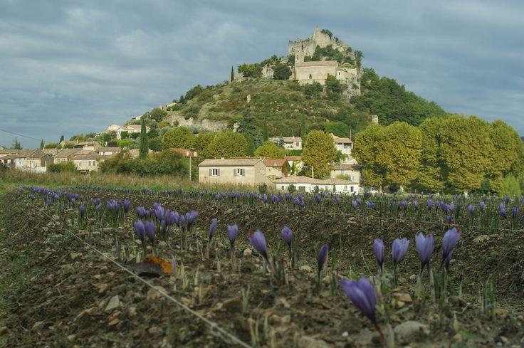 Safran de Provence - l or rouge des 3 rivieres