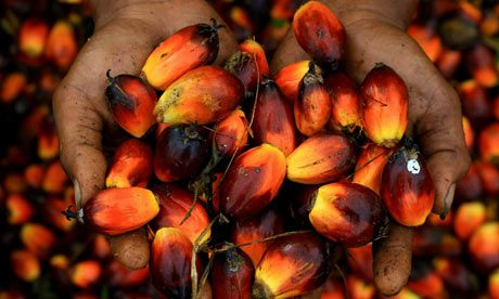 Coles v Woolworths: palm oil scorecard reveals markedly different rankings