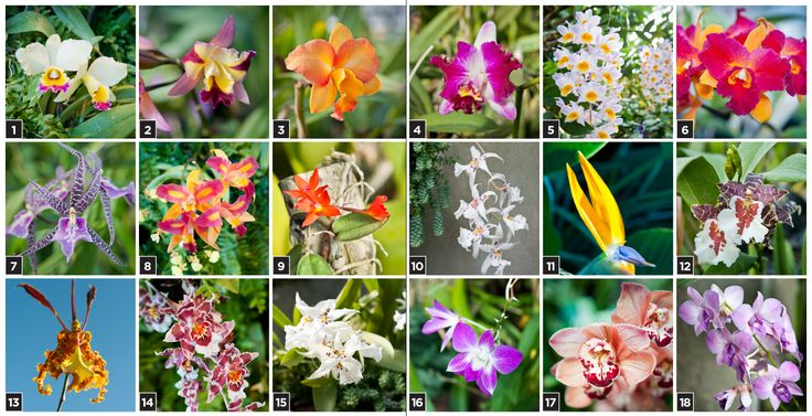 Orchid varieties (name list in link) Florals Pinterest