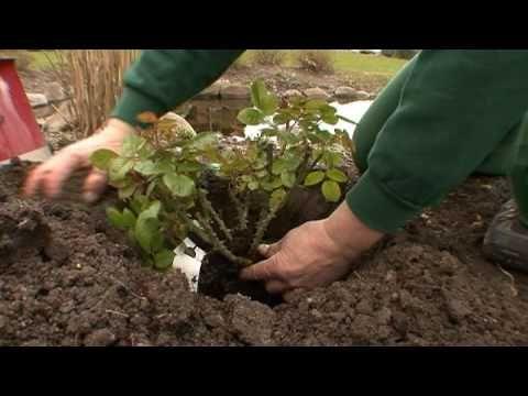 Aprilhaven Planteriget.dk - Plantning af stauder, roser, buske og træer - YouTube