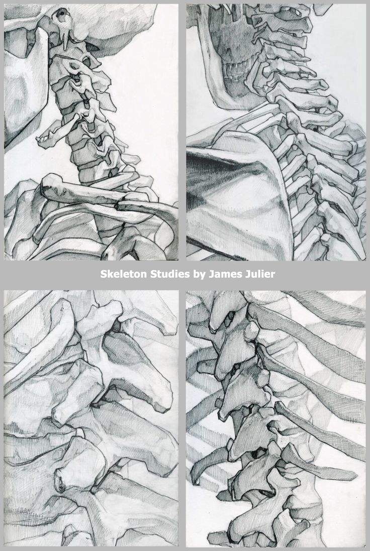 skeleton drawings, useful anatomy reference of the spine and vertebrae