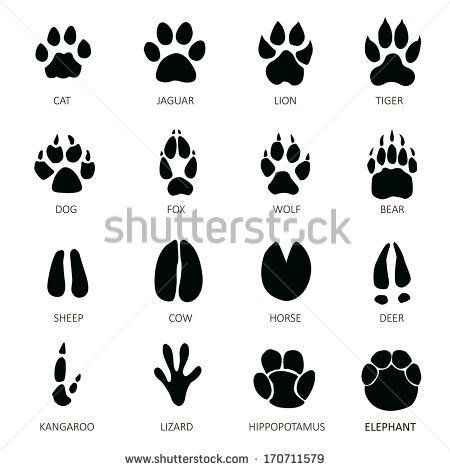 Animals footprints                                                                                                                                                     Mais