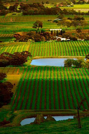 Henschke | Barossa Valley Region | Exceptional Wines from outstanding vineyards