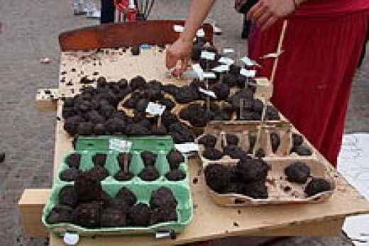 how to make seed bombs with newspaper