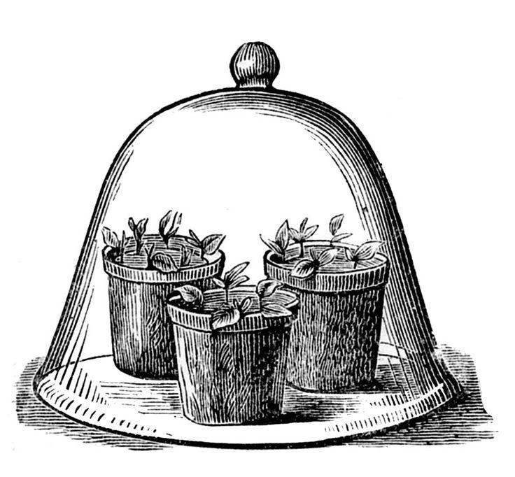 Vintage Garden Clip Art   Glass Cloche With Pots