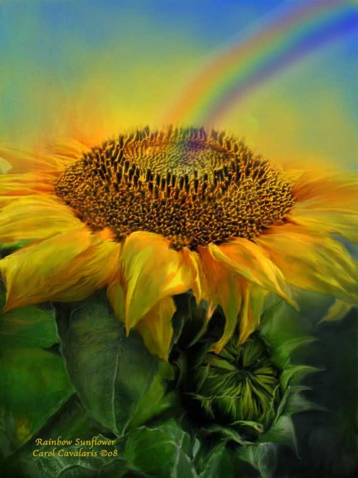 Rainbow Sunflower   By Carol Cavalaris