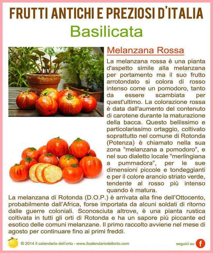 Basilicata: Melanzana Rossa