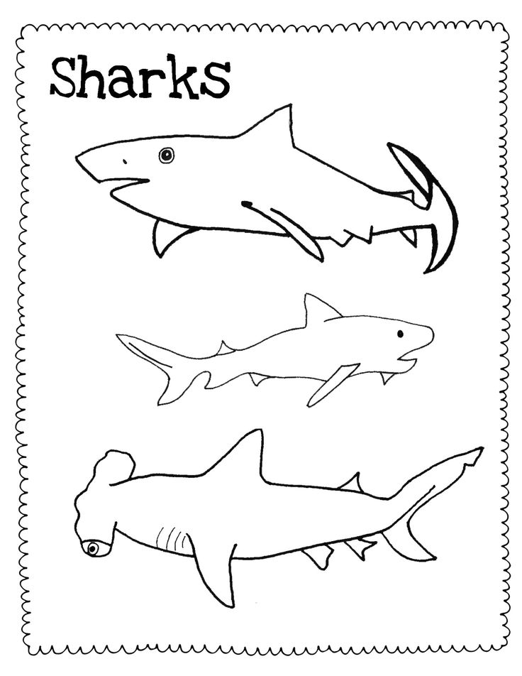 Watercolor Sharks and Free Shark Drawing Guide/Coloring