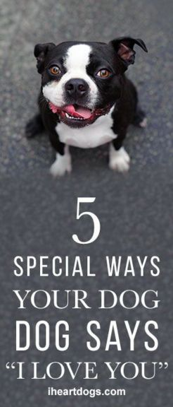 5 Special Ways Your Dog Says I Love You