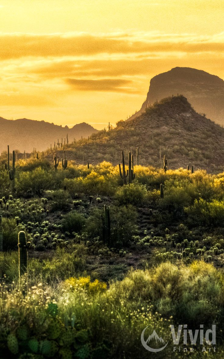 Arizona desert sunset taken just north of Phoenix.