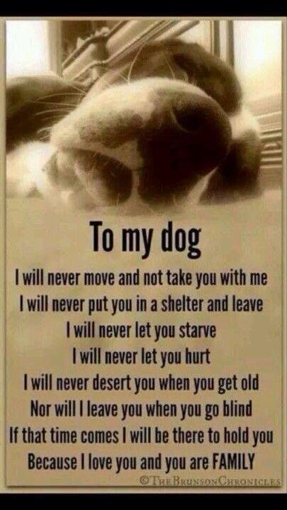 An oath all animal owners need to take