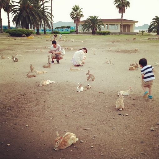 The island of Ōkunoshima in the Inland Sea of Japan is famous for two things: poison gas and bunnies. (story in comments)
