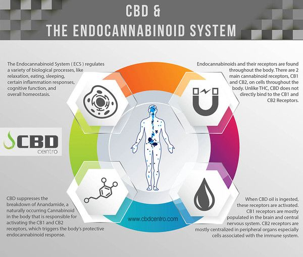 How CBD oil cannabidiol effects the body...CBD supports the body's endocannabinoid system—a system that helps to regulate several important bodily functions such as mood, inflammation, appetite and relaxation. #cbd #CBDoil #cannabidiol #hemp #cbdvape #cbdrich