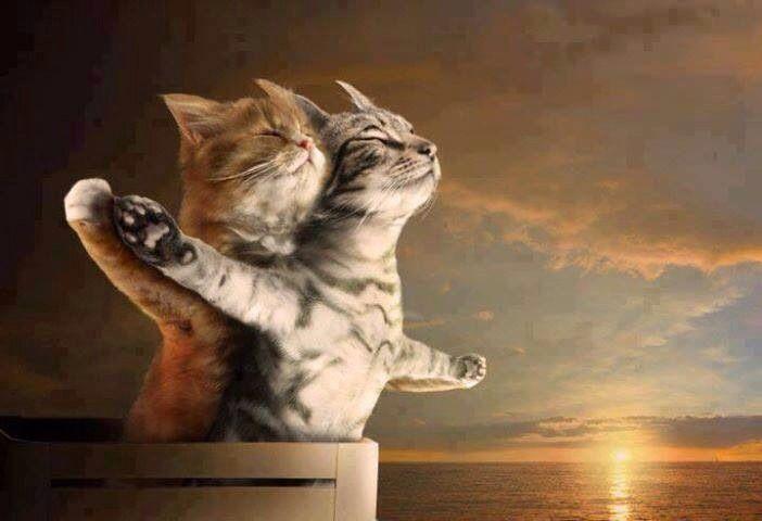 Titanic. LoL 😜 Funny cat compilation, Funny cat names