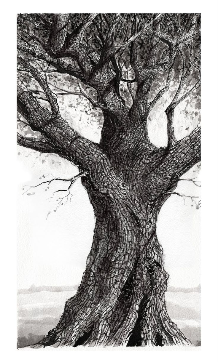 Thomas Haskett Illustration: Oak Tree, Heligan