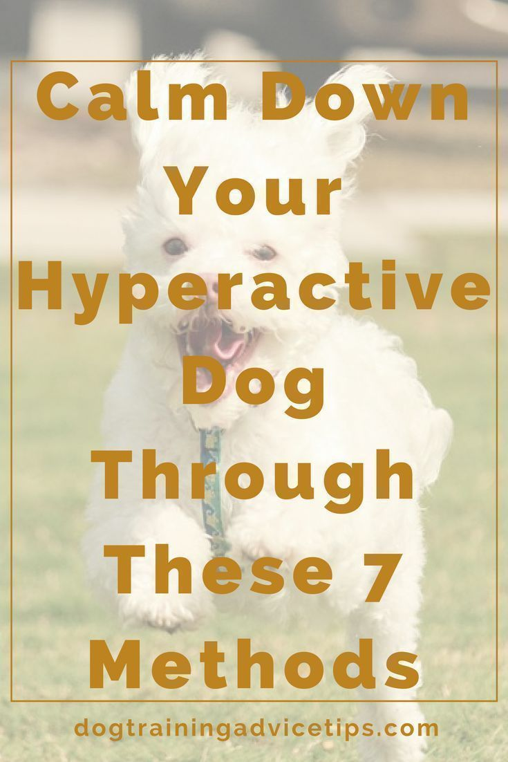 Calm Down Your Hyperactive Dog Through These 7 Methods
