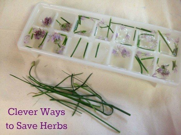 Conserva hierbas congelándolas dentro de cubos de hielo.