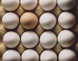 Egg nutrition center  Eggs are great for breakfast, post workout, hard boiled as snacks etc. Eat the yolk too - it's where all the nutrients are!