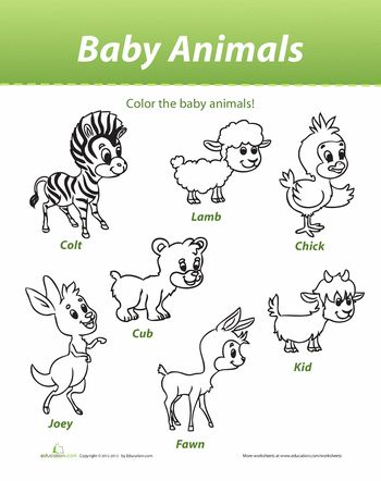 Worksheets: Baby Animals-learn names of baby animals