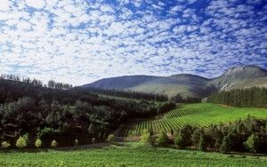 Elgin is located approximately 70 kilometers from Cape Town and is known, first and foremost for fruit, and by fruit we mean apples. Many of the ...