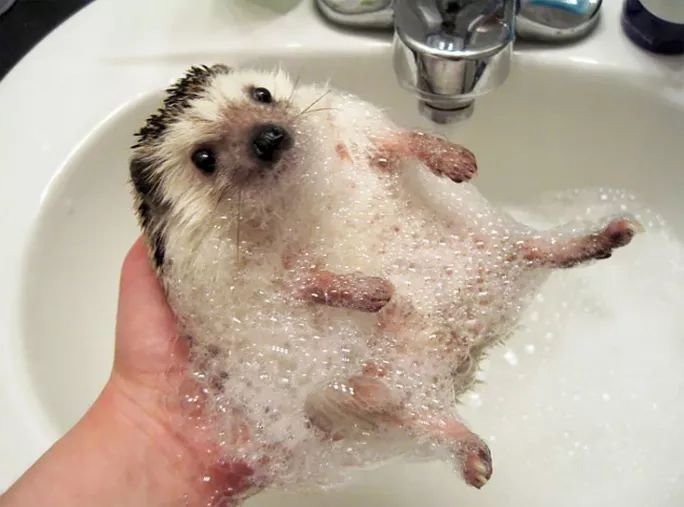 All Interesting | Pictures Of Hedgehogs