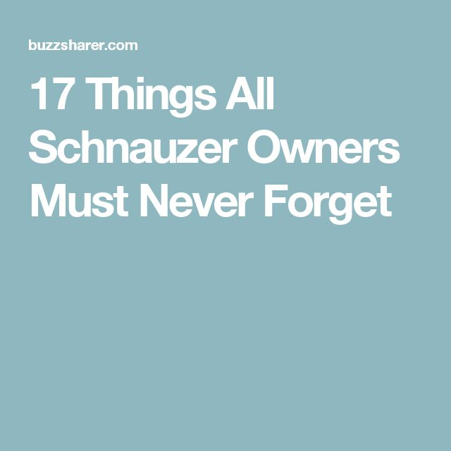17 Things All Schnauzer Owners Must Never Forget