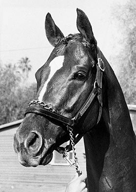 Affirmed: Champion, Horse of the Year, Triple Crown Winner 1978. Breyer made a model of him several years ago.