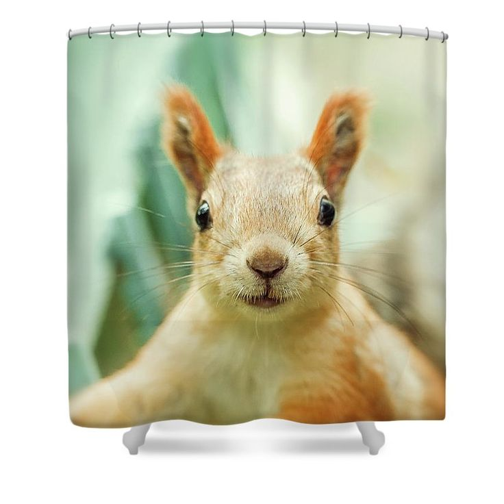 Shower Curtain featuring the photograph Face Of Cute Squirrel by Oksana Ariskina for children and kids. Cute and funny wild animals! #OksanaAriskina #Squirrel #WildAnimal Available as poster, greeting card, phone case, throw pillow, framed fine art print, metal, acrylic or canvas print with my fine art photography online: www.oksana-ariskina.pixels.com
