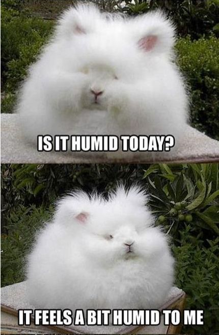 This is me on a humid day! LOL