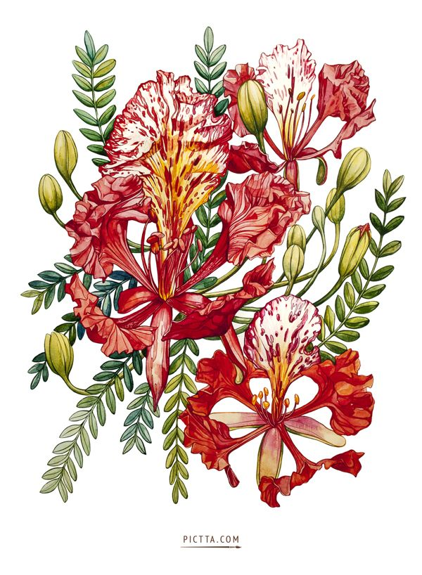 Delonix Regia by PICTTA , via Behance