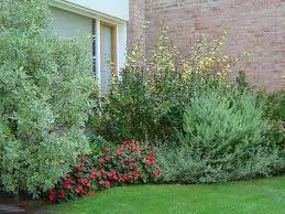 jardines con arbustos perennes buscar con google