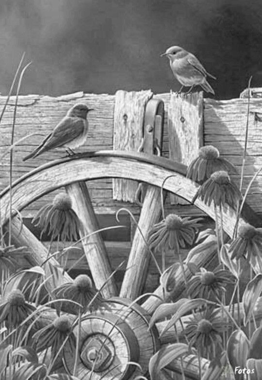 124 best Birds, Insects etc Coloring Pages 2 images on Pinterest - best of coloring pages adults birds