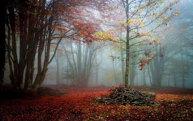 Autumn forest - ....