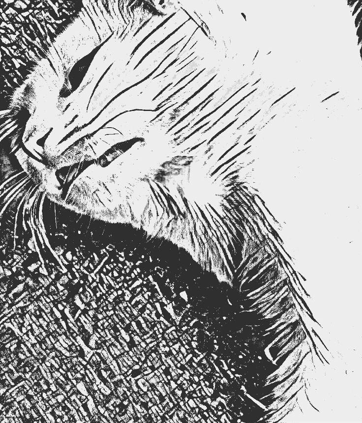 drawing, illustration, digital art cat black white black&white b&w
