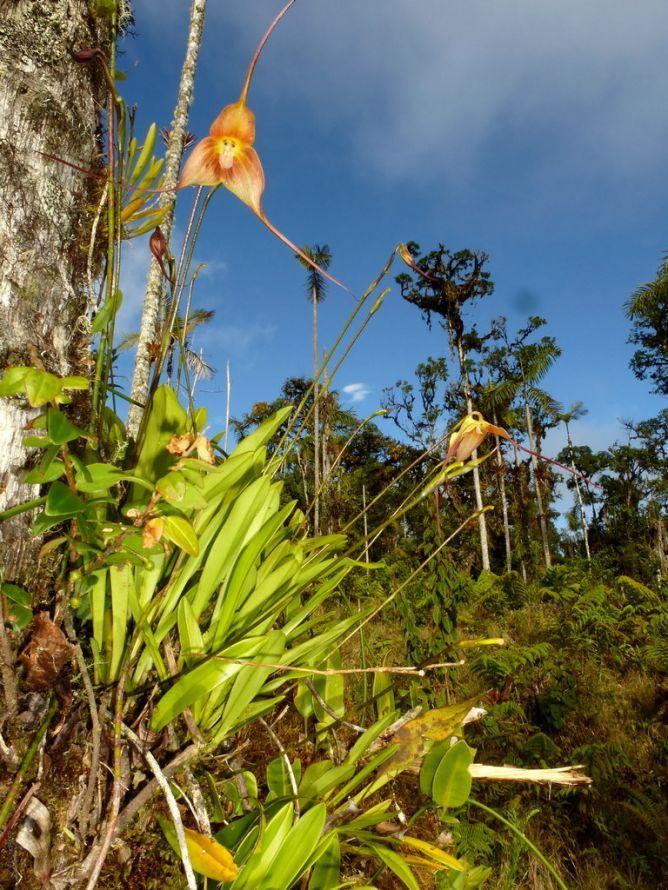 Orquídeas mono