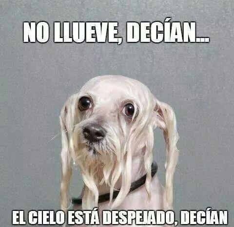 jajajajajajajajaja un perro mojado meme risa