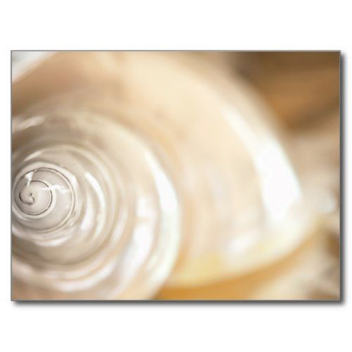 Pearly White Sea Shell Marine Nature Postcard