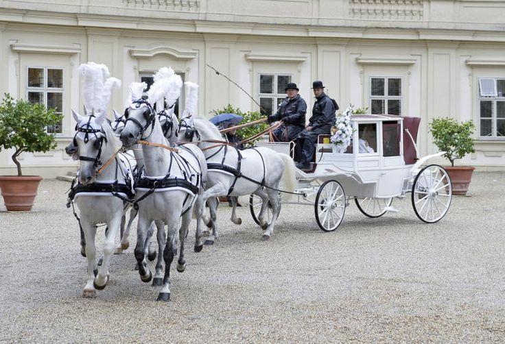 Lugner-Hochzeit: Bauunternehmer Richard Lugner und seine Cathy Schmitz haben sich getraut. Am Samstag fand die pompöse Hochzeit in Wien statt. Mehr Bilder des Tages auf: http://www.nachrichten.at/nachrichten/bilder_des_tages/ (Bild: APA)