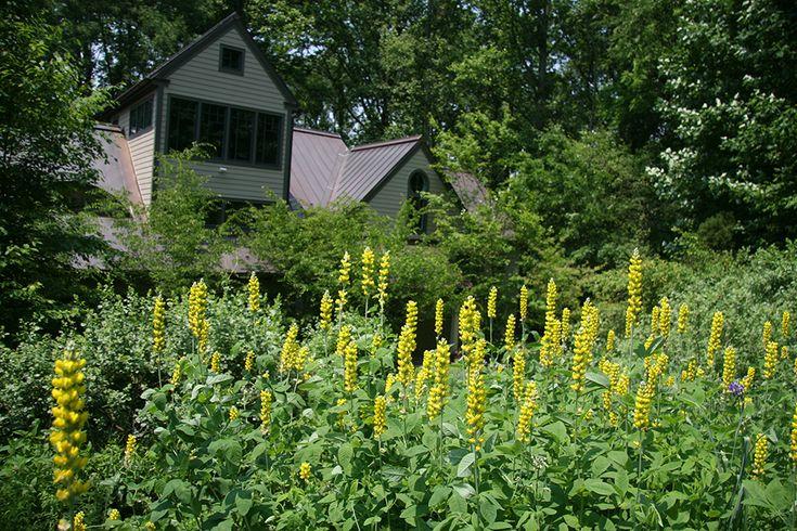 Jardim privado em Chester Springs, estado da Pensilvânia, USA.  Paisagismo: Larry Weaner.