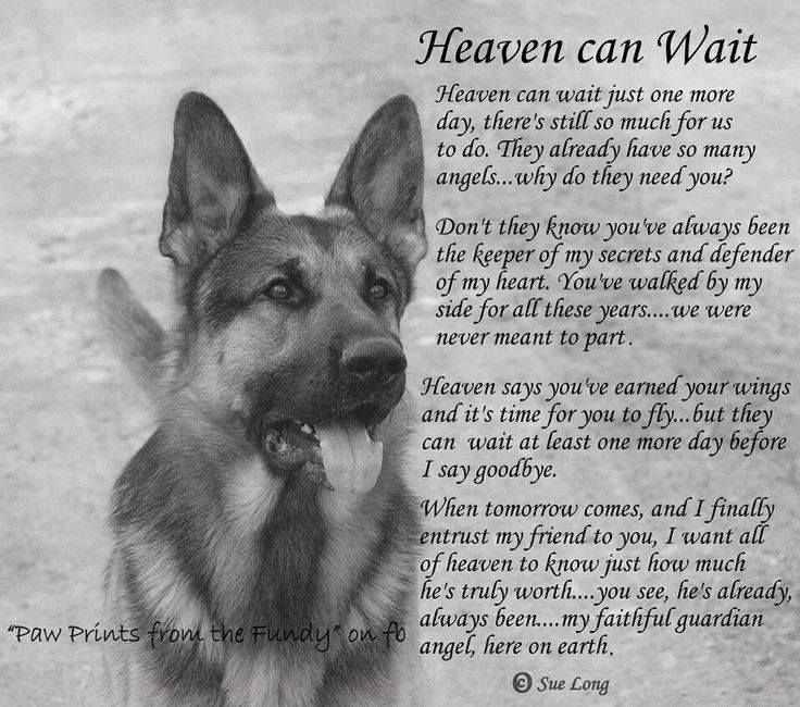 Sayings And Quotes Dog Heaven